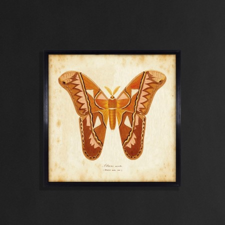 Entomology Wall Art